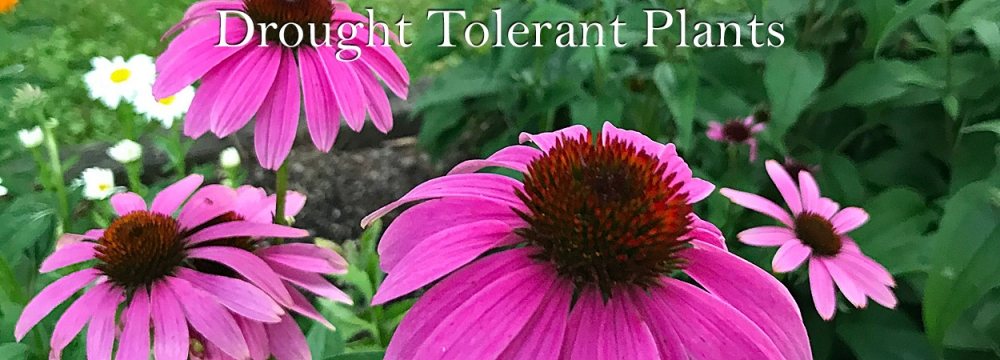 Graceful Gardens Drought Tolerant Plants