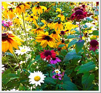 A Garden Collection Ready To Plant