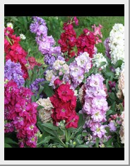 Annual Flowers Stock